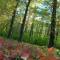 Hévíz - Látnivalók - Véderdő, park