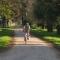 Kerékpárral a Fenyves-allén