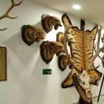 Vadászati és Történelmi Modellvasút kiállítás
