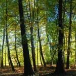 Véderdő Park