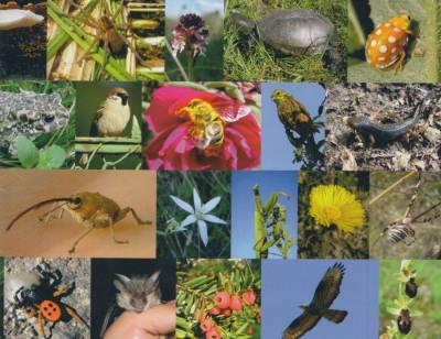 A Bakony biodiverzitása a Balatontól a kisalföldig c. kiállítás a Balatoni múzeumban