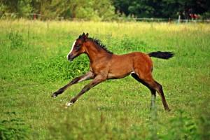 horse-2510189_1920 (1)
