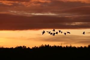 migrating-birds-2769633_1920