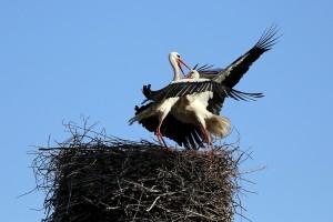stork-2946085_1920