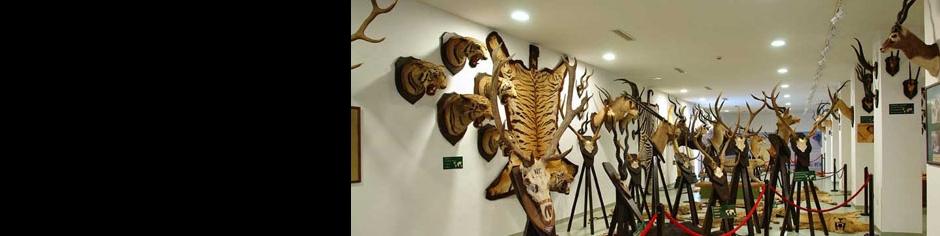 <div><h3>Keszthely</h3><p><strong>Vadászati és Történelmi Modellvasút kiállítás</strong> - Keszthely legújabb múzeumában Európa egyik legnagyobb terepasztalát és trófeagyűjteményét nézheti meg</p></div>